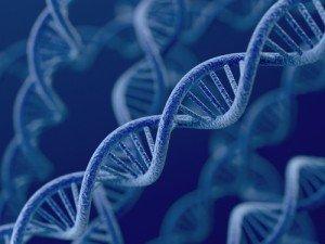 Human Genes